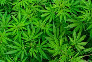 Roadside Marijuana Screening Tests